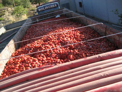 la tomatina l imagem: uol