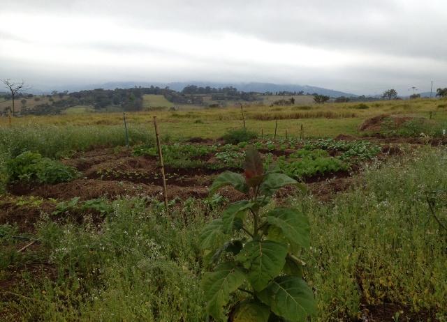 horta em mandala em terreno