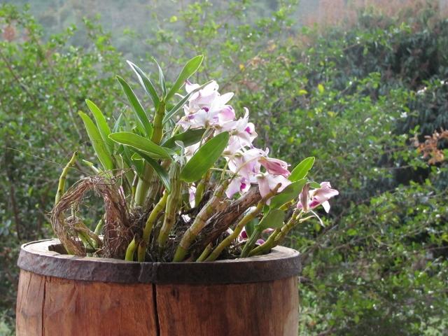 orquídea encontrada às margens do Rio Aiuruoca, que corta o terreno