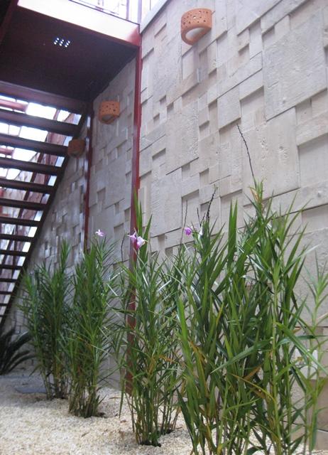 canteiro com cicas e orquídeas-bambu
