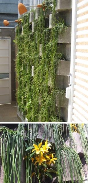 muro verde de entrada e detalhe de orquídea entre as ripsális